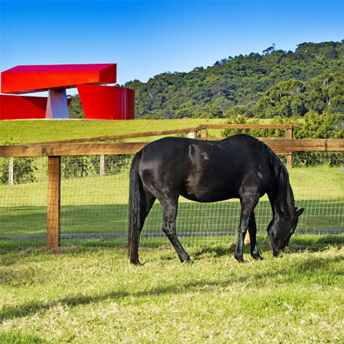 willinga park equestrian centre in bawley point