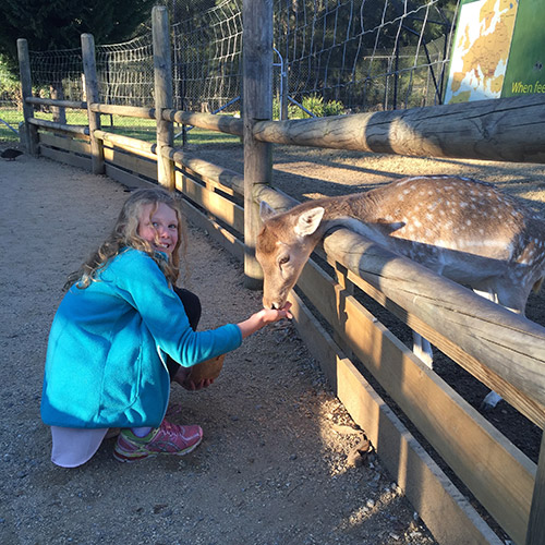 deer feeding at mogo zoo